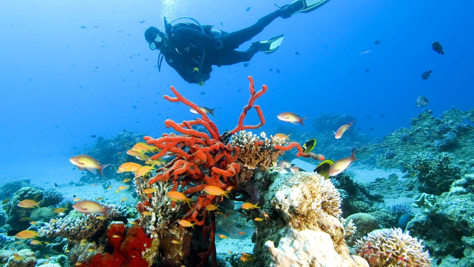 иордания туры на красное море фото вчера