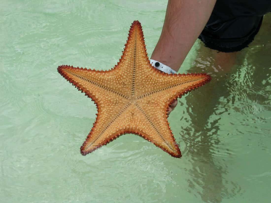 На пляже Плайя Сирена можно встреть всевозможную живность