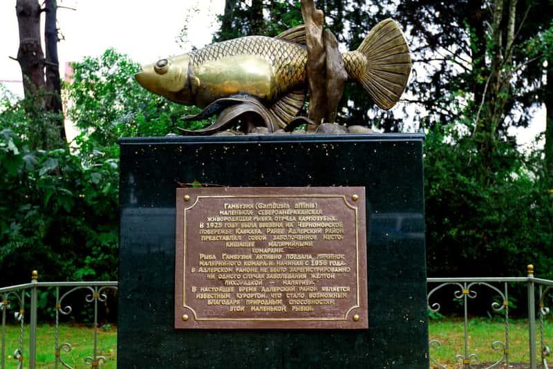 Памятник той самой Гамбузии, Сочи, Россия