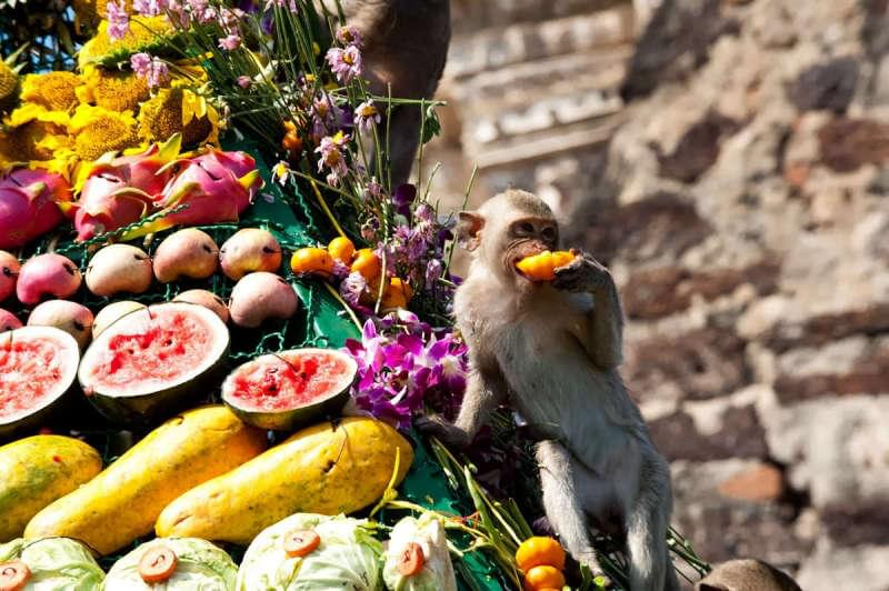 Фестиваль обезьян Лопбури, Таиланд