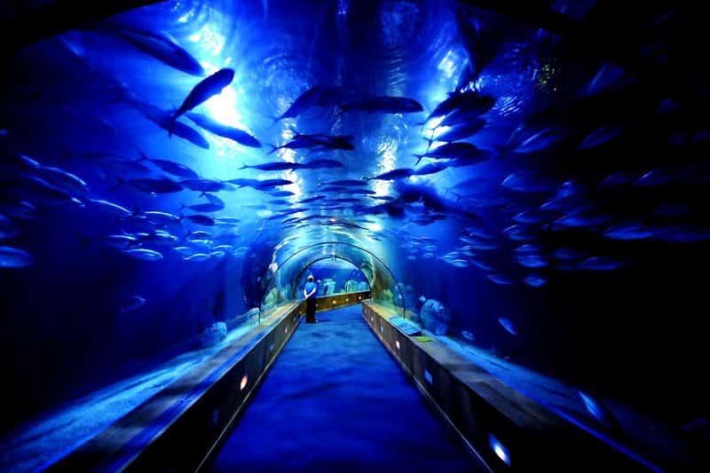 Океанографический парк Валенсии, Испания